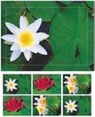 Doppelkarten-Böxli 804 SEEROSEN